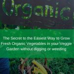 The Secret to the Easiest Way to Grow Fresh Organic Vegetables in your Veggie Garden without digging or weeding – low effort way to grow food