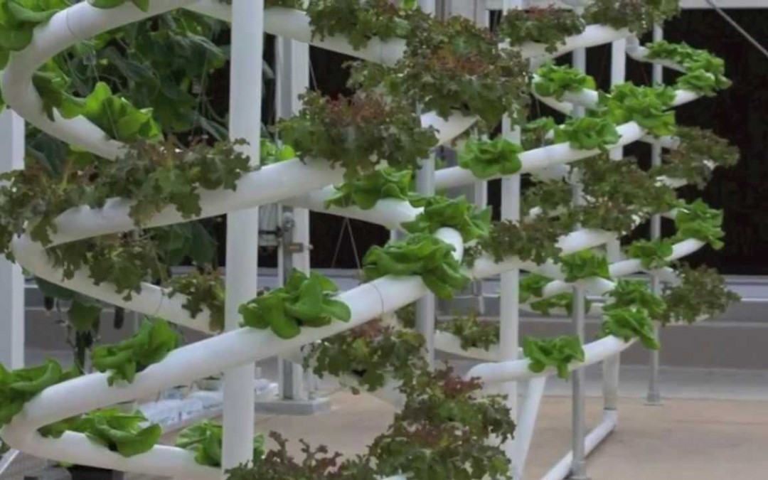 Diy Hydroponic improve beds utilizing the Bell siphon