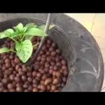 Do-it-yourself Hydroponic Drip Bucket System
