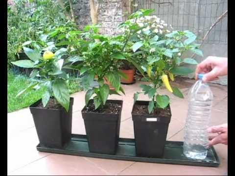 DIY Watering Tutorial for Potted Vegetation