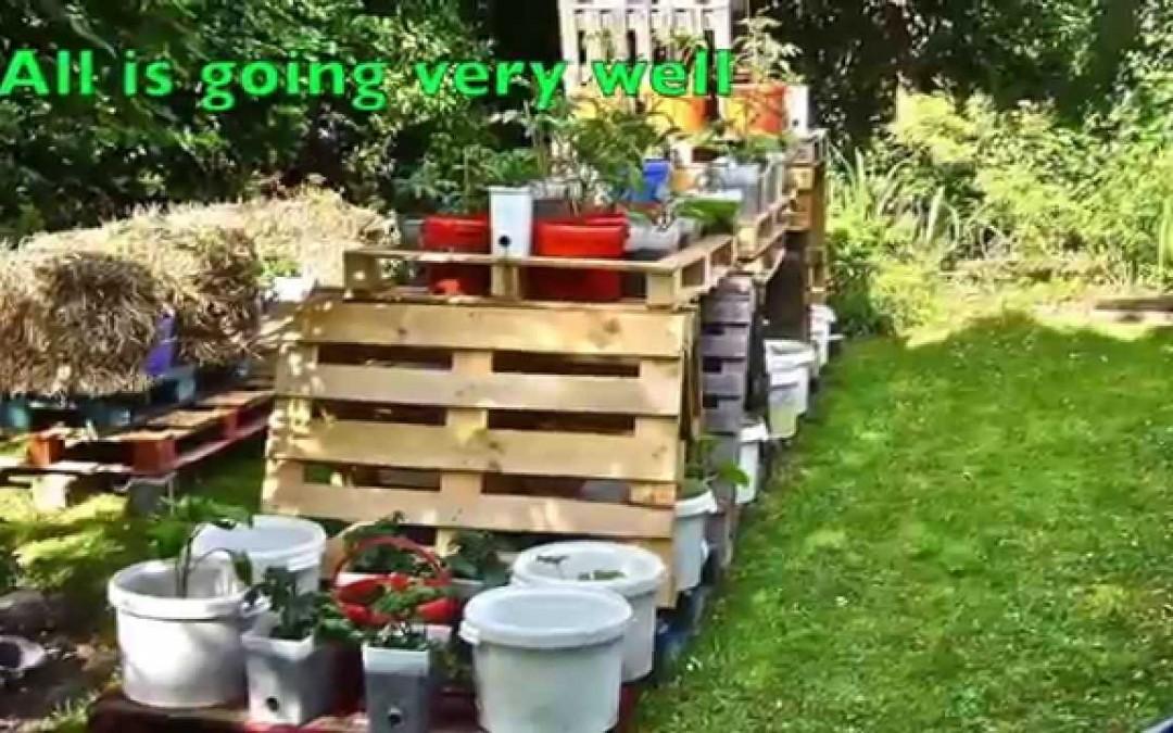 My initial pallet back garden