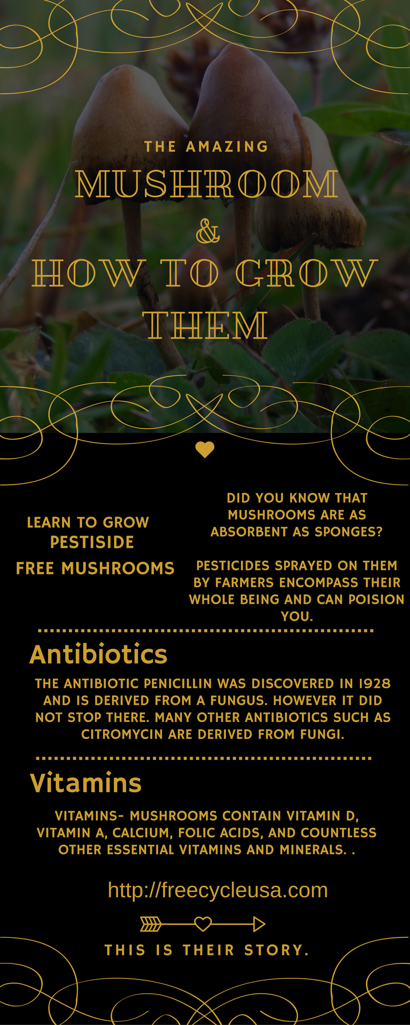 facts-about-the-mushroom