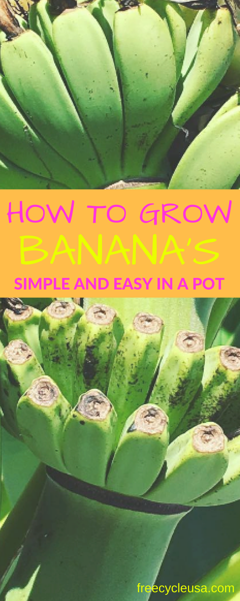 How To Grow Banana In A Pot Freecycle Usa