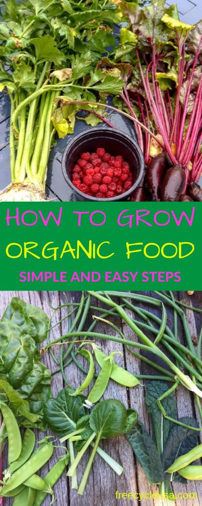 how-to-grow-organic-food