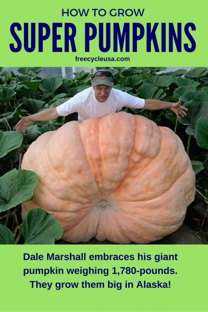 how-to-grow-pumpkins
