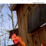 Homemade Chicken Coops – Important Tips For Beginners