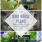 Bird House Plans – Build a Nest Box That Will Attract the Species You Want