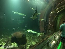 hatalmas vizák a Tisza-tavi Ökocentrum akváriumában