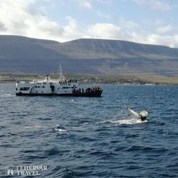 bálnales Akureyri környékén