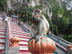 éhes kismajom a Batu-barlangok lépcsőjén
