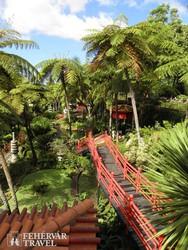 hangulatkép a Monte Palace Trópusi Kertből