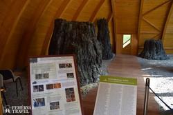 Ipolytarnóc - a bükkábrányi ősfák