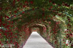 a Rózsakert Fertődön (részlet)