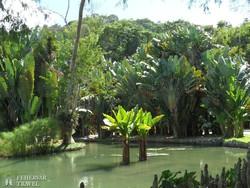 Rio: a botanikus kert egy részlete