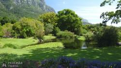 Kirstenbosch Botanikus Kert – részlet