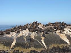 a fókák szigete Hout Bay-ben