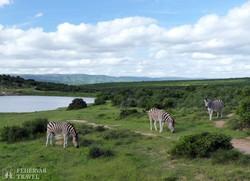 zebrák a Pilanesberg Nemzeti Parkban