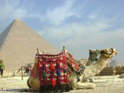 tevék a Gízai Piramisoknál