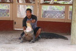 aligátor show az indián skanzenben