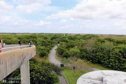 kilátó az Everglades Nemzeti Parkban