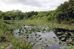tipikus táj az Everglades Nemzeti Parkban