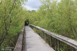 sétaút az Everglades Nemzeti Parkban