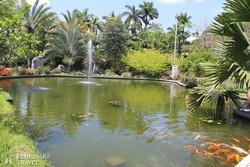 Miami botanikus kertje