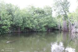 sétahajózás a Fekete-folyón (Black River szafari)