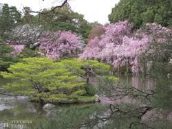 virágba borult park Narában