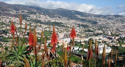 panoráma Funchalra a Barcelos kilátópontról