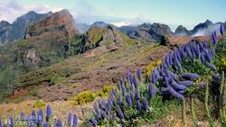 táj a Pico do Arieirónál, Madeira egyik legmagasabb hegycsúcsánál