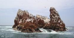 Ballestas-szigetek – részlet