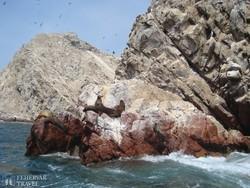 fókák a Ballestas-szigetek egyikén