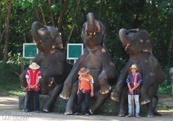 elefánt-show a farmon