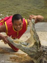 krokodilshow