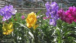az orchidea farm egy részlete