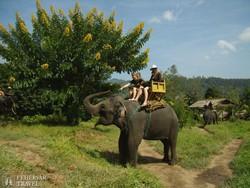 elefántszafari Chiang Mai környékén