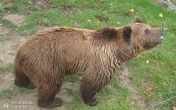 a berni medvepark egyik lakója