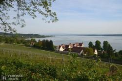 a Boden-tó feletti szőlőskertek Birnaunál