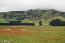 tipikus Új-Zélandi táj Queenstown környékén