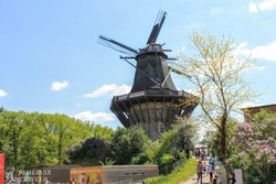 Potsdam: régi szélmalom a Sanssouci Parkban