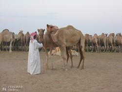 tevepiac Al Ainban