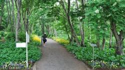 a botanikus kert Akureyriben – részlet