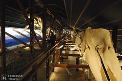 a Bálna-múzeum Húsavikban