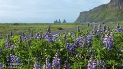 gyönyörű táj Izland déli partjai mentén