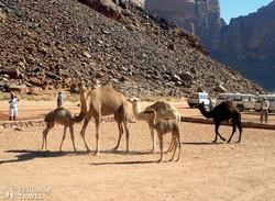 a sivatag hajói Wadi Rumban