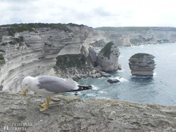 meredek sziklás part Bonifaciónál