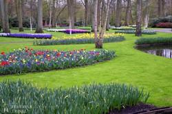 tulipánvirágzás Keukenhofban