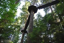 Vancouver: sétaút az esőerdő fáinak tetején