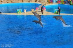 játékos delfinek a Marinelandban